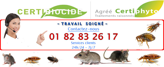 Insectes Suresnes